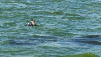 В Воронеже нашли мужчину, утонувшего на глазах у очевидца вблизи популярного пляжа