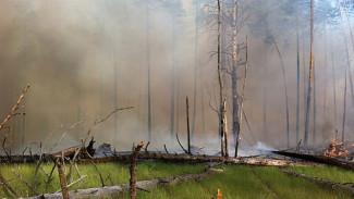 Крупный лесной пожар подобрался к жилым домам в Воронежской области