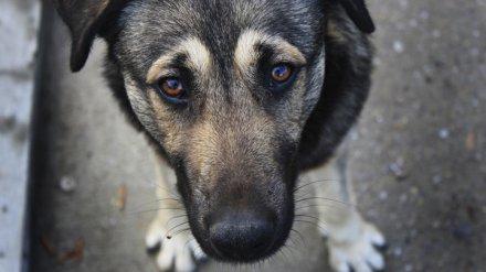 На содержание и усыпление бездомных собак в 3 районах Воронежа потратят 5,7 млн рублей
