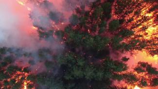 Пожар в воронежском селе уничтожил 70-летние сосны