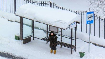 Общественники: в Воронеже на обновлённый маршрут №49м не вышла ни одна маршрутка