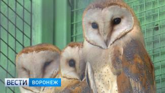 В Воронежском зоопарке открылся обновлённый «райский сад» для пернатых и посетителей