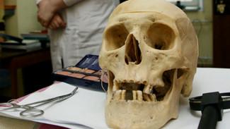В Воронежской области по черепу опознали останки пропавшего 12 лет назад человека