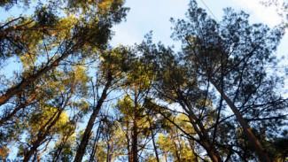 Чиновники назвали главные угрозы существованию Северного леса в Воронеже