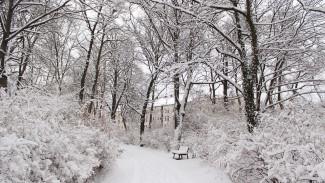 Метеорологи: в январе Воронеж накрыли аномальные снегопады