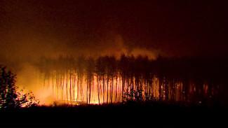 Огненный апокалипсис. Как Воронежскую область спасали от страшных пожаров 2010 года