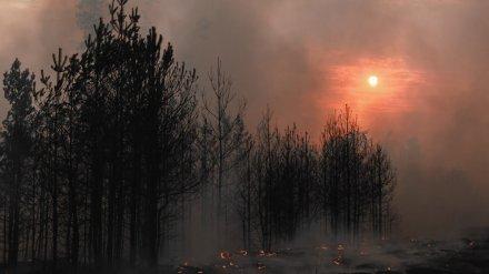 В Воронежской области бушующие пожары уничтожили 28 домов