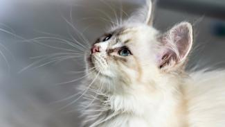 Жительница Воронежа лишилась всех денег, польстившись на несуществующего котёнка