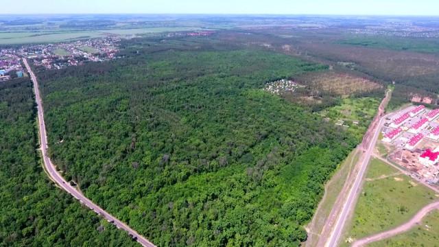 Новый «Олимпик». Жители пригорода Воронежа протестуют против превращения леса в парк