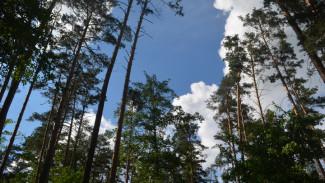 Региональные власти вернулись к планам создания «зелёного пояса» вокруг Воронежа
