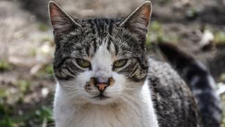 В воронежском селе объявили карантин по бешенству животных