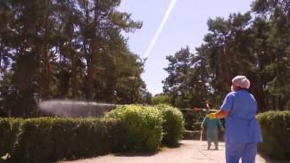Воронежские парки защитят от клещей и комаров