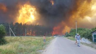 В воронежском селе потушили крупнейший лесной пожар