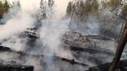 В Богучарском районе Воронежской области потушили крупный лесной пожар
