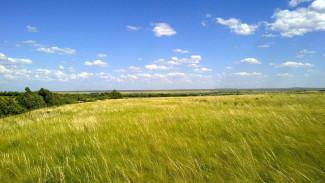 Заповедные земли под Воронежем могут застроить жилыми домами