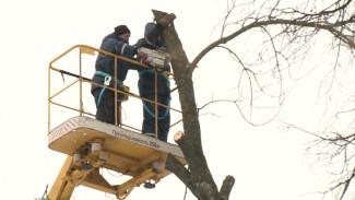 В Воронежской области десяткам гектаров леса угрожает уничтожение из-за вредителей