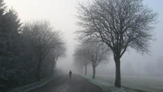 Синоптики предупредили о накрывшем Воронеж опасном тумане