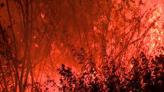 Мощный пожар в Воронежской области остановили в 400 м от посёлка