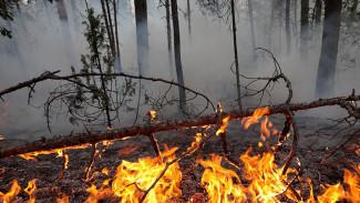 В Воронежской области за день сгорело 110 га леса