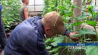 Ученики Калачеевской школы-интерната восстановили разрушенную теплицу
