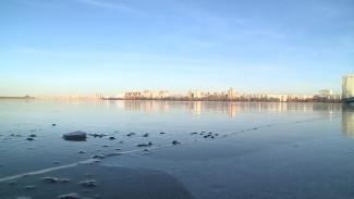 Воронежское водохранилище предложили очистить с помощью водорослей и кисломолочных биодобавок