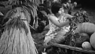 Советский «Город-сад». Чем удивляли воронежцев на выставке плодов и цветов в 70-х годах