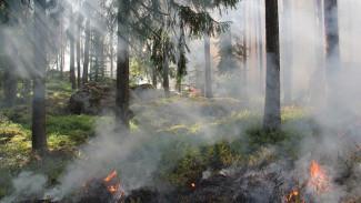Воронежский губернатор предложил усилить меры по предотвращению ландшафтных пожаров