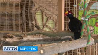 В новой пернатой коллекции Воронежского зоопарка уже более 100 питомцев