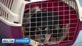Воронежцев проконсультируют по вопросам содержания домашних питомцев