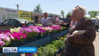 Воронежцам рассказали, как распознать «липовые» семена и рассаду