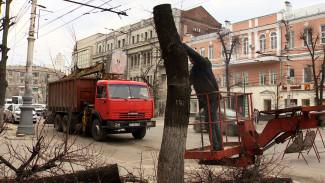 В Воронеже старые липы на проспекте Революции заменят на «круглые» деревья