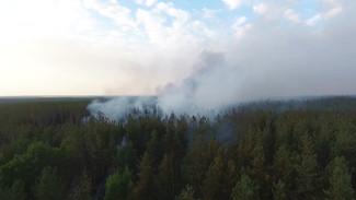 Пересохшие водоёмы и лесные пожары. Как на Воронежской области отражается глобальное потепление