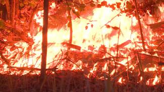 В Воронежской области не нашли поджигателей лесов по 7 уголовным делам