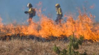 Высший класс пожароопасности объявили на востоке Воронежской области