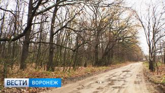 Проект «зелёного пояса» вокруг Воронежа во второй раз рассмотрят в декабре