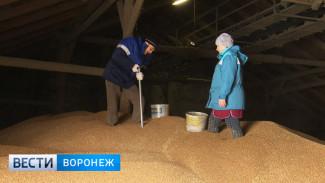 На элеваторе в Воронежской области чистое зерно смешивали с мусором
