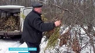 Бутурлиновские охотоведы решили подкормить животных в Шиповом лесу