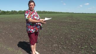 Воронежские сельчане доверились соседке и остались без земли