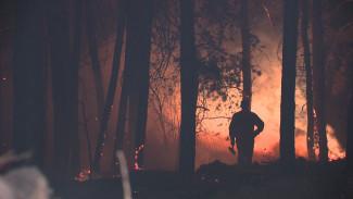 В Воронежской области потушили начавшийся от костра пожар на площади в 80 га
