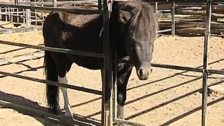В следующем году Воронежский зоопарк планирует строить конюшню