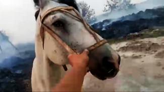 Появилось видео экстренного спасения животных с горевшей фермы в воронежском селе
