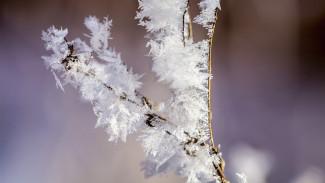 Синоптики спрогнозировали возвращение в Воронежскую область мороза и снега