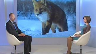 Учёный в программе «Вести-Интервью» рассекретил воронежскую «чупакабру»