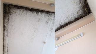 Пациентка обнаружила чёрную плесень на потолке в воронежской больнице