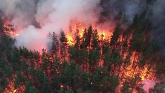Прокуратура взяла на контроль крупный лесной пожар вблизи воронежского санатория