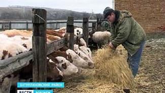 Четыре фермера из Бутурлиновского района выиграли гранты