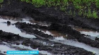 Тропические ливни заливают воронежские посевы – аграрии ожидают худшего