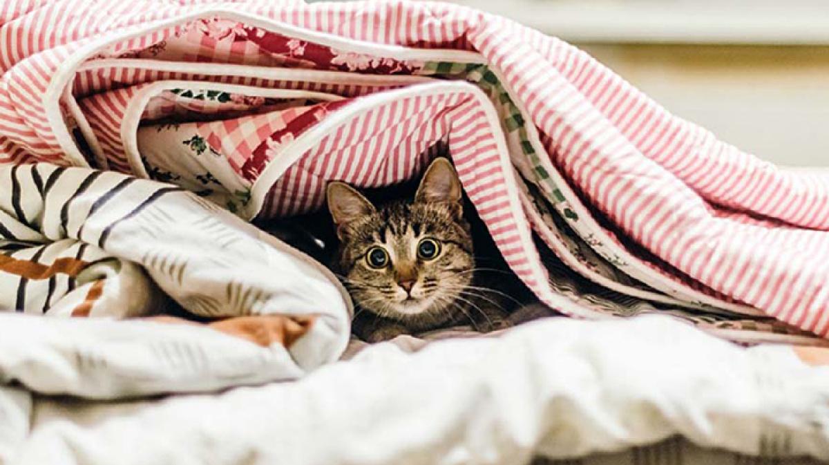 картинки стянутое одеяло готовятся