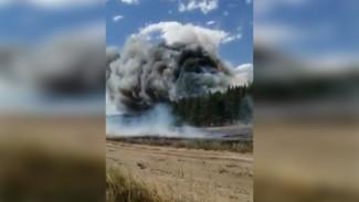 «Готовы к эвакуации». Воронежские сельчане рассказали о сильнейшем лесном пожаре