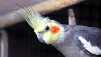 Как Воронежский зоопарк восстанавливается после гибели всех пернатых из-за птичьего гриппа
